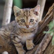 toilettage pour chat granby
